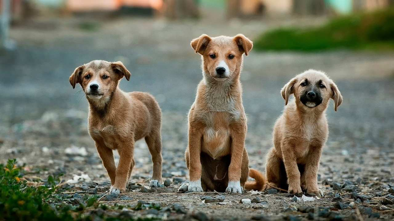 Ministry of Health and Animal Husbandry launch national action plan to eradicate dog medicated rabies by 2030
