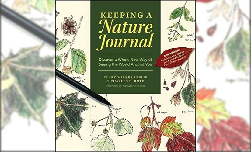 In times of climate crisis why naturejournalling can be a simple yet potent tool to build intimacy with nature