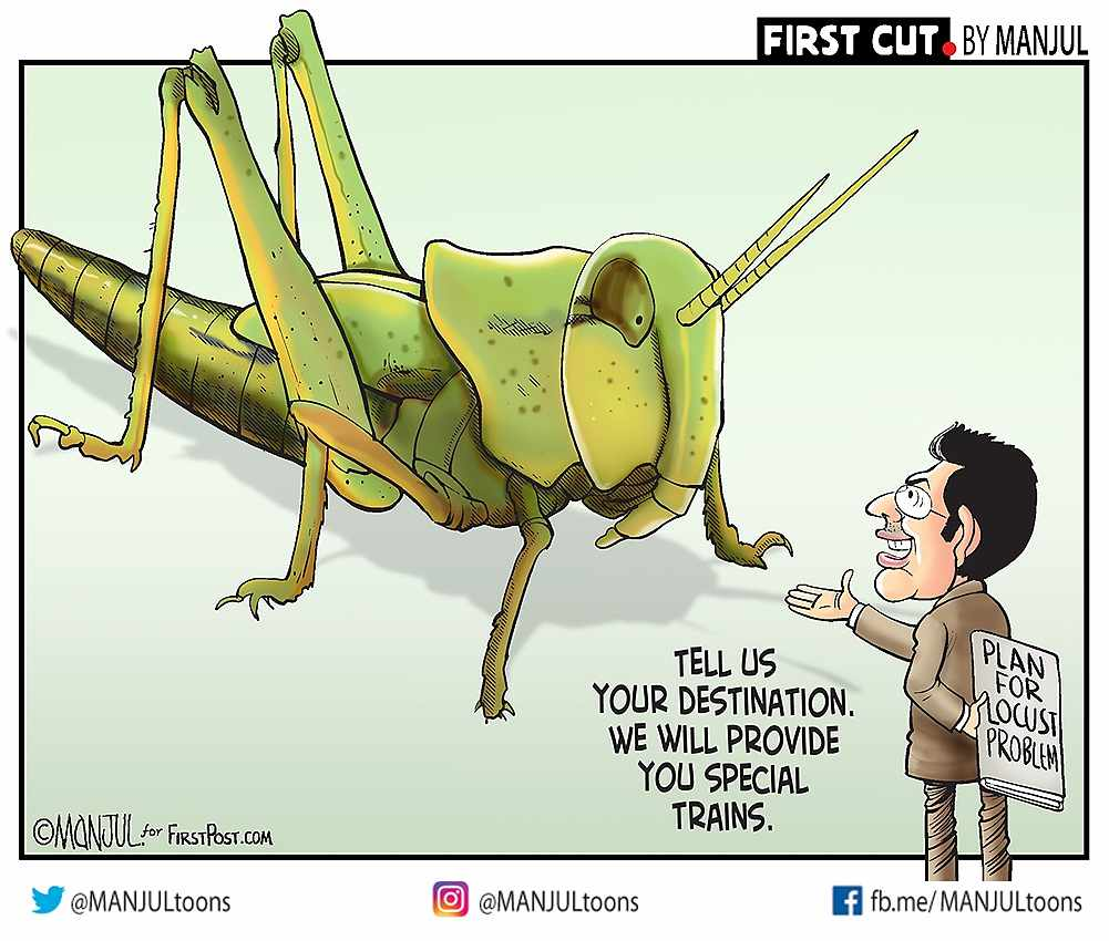 India braces for worst locust attack in three decades: Authorities procure drones, pesticides but financial damage from crop loss to be huge