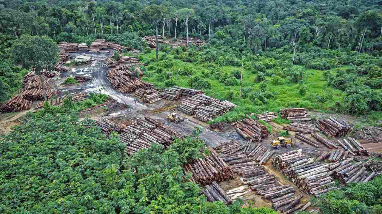 Pandemics tied to fragmented forests biodiversity loss What science says and Indias response