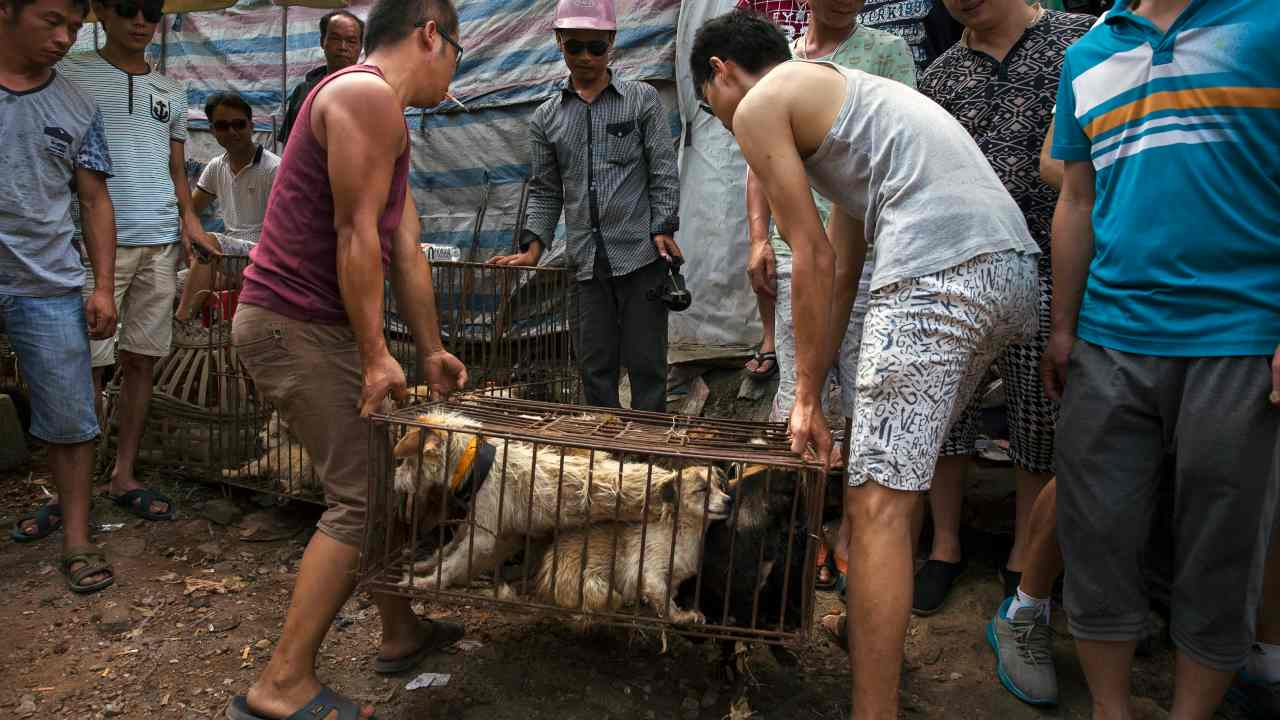 Coronavirus now an ally to Chinese activists in their fight to ban dog meat - World News , Firstpost