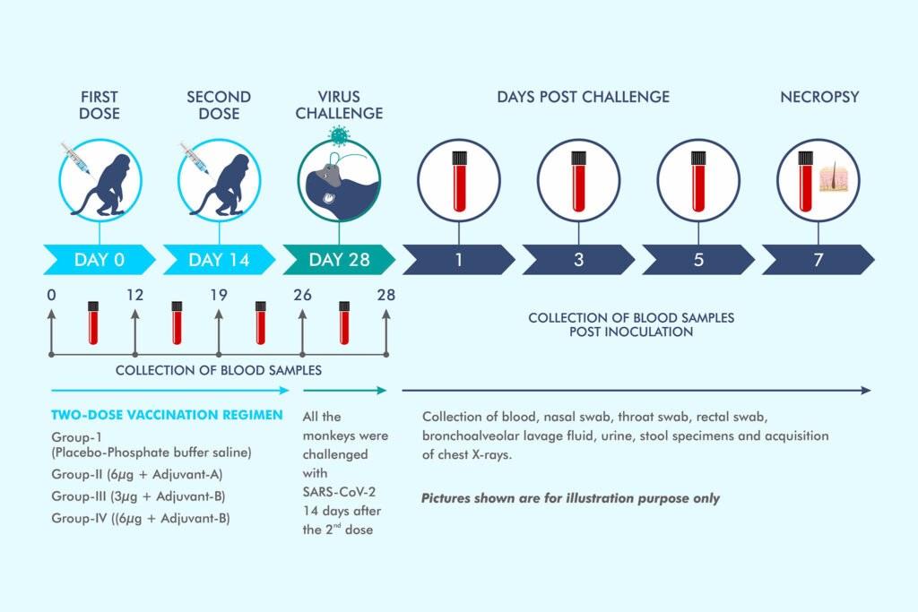 प्रायोगिक COVID19 वैक्सीन के पशु परीक्षण के परिणामों से भारत बायोस COVAXIN आठ टेकअवे