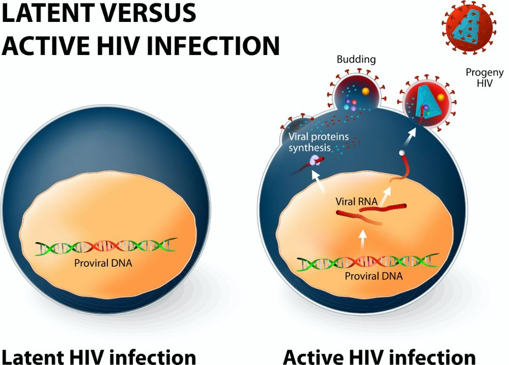 Does COVID19 linger in the body What we know about viruses in general staying on in the brain testicles
