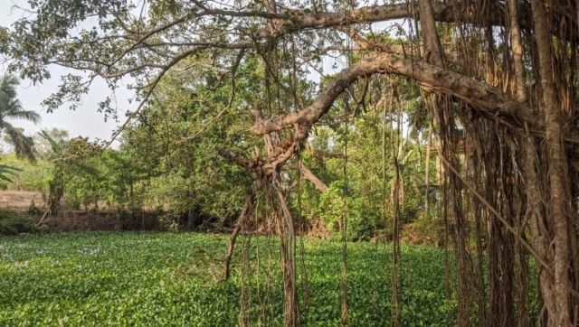 In a bid to revive dying ponds in Goa local community seeks help from stranded migrant labourers