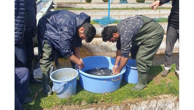 Peternakan ikan trout membuka pintu baru bagi bisnis dan pariwisata di Jammu dan Kashmir muncul sebagai sumber pendapatan penting