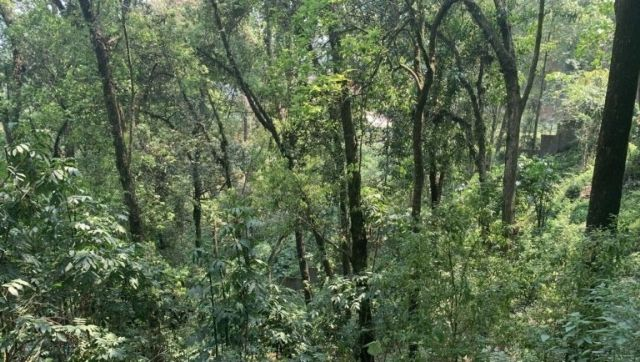 New study finds Sikkims urban sacred groves mitigate double the carbon compared to a natural rural forest