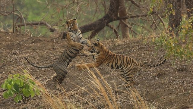 World Earth Day Nat Geos Planet Possible boasts of two titles that present a lively hopeful view of endangered wildlife