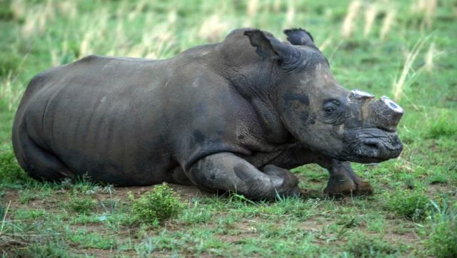 Why rhinos are endangered species and what can the world do to save them