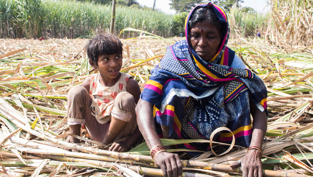 In lockeddown Maharashtra sugarcane field labourers lives are upturned by rising debt inability to access education
